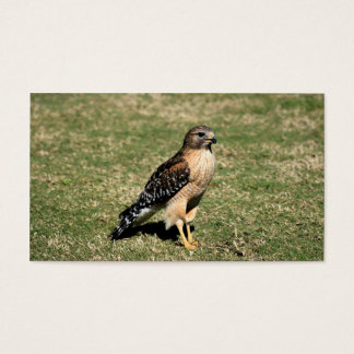 Red Shouldered Hawk on Golf Course Business Card