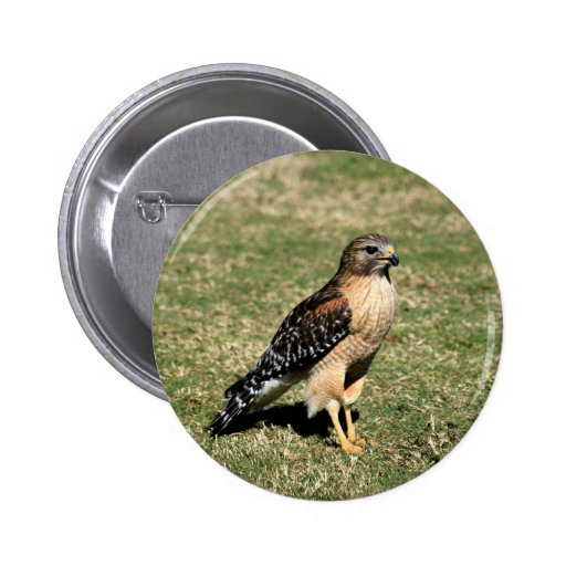 Red Shouldered Hawk on Golf Course Pinback Button