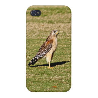 Red Shouldered Hawk on Golf Course Case For iPhone 4