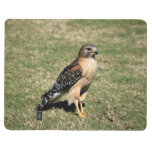 Red Shouldered Hawk on Golf Course Journals
