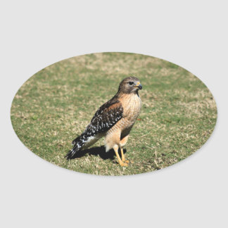Red Shouldered Hawk on Golf Course Oval Sticker