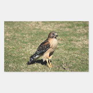 Red Shouldered Hawk on Golf Course Rectangular Sticker