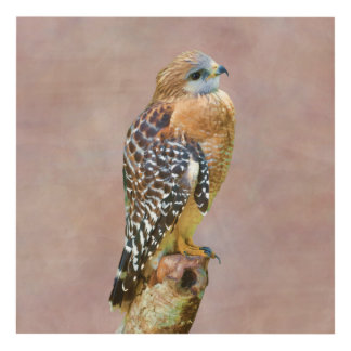 Red-Shouldered Hawk Panel Wall Art