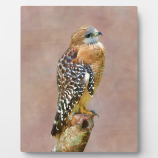 Red-Shouldered Hawk Photo Plaques