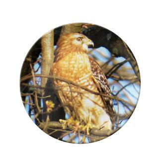 Red-shouldered Hawk Porcelain Plate