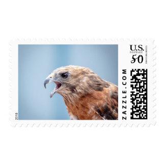 Red Shouldered Hawk Postage