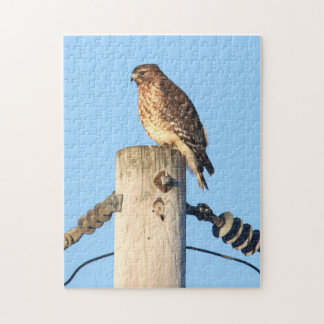 Red-shouldered Hawk Jigsaw Puzzles