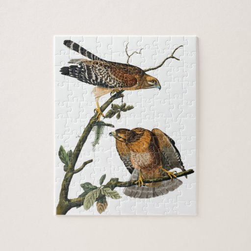 Red-shouldered Hawk Puzzle