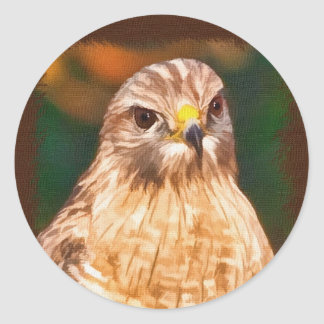 Red-shouldered Hawk Sticker