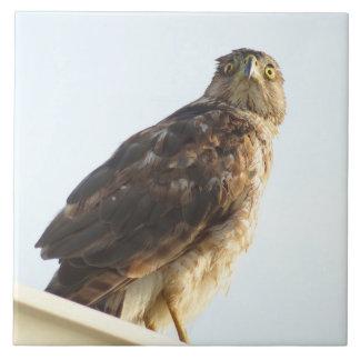 Red-Shouldered hawk Tile