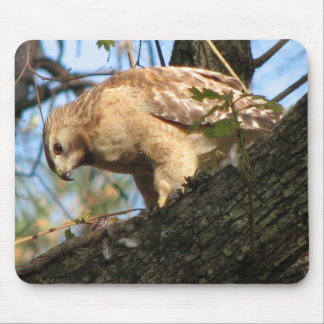 Red-shouldered Mousepad