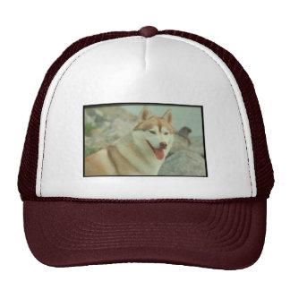 Red Siberian Husky Hats
