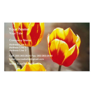 Red Single early tulips Keizerschroon flowers Business Card