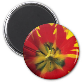 Red Single late tulip Flaming Beauty flowers Magnets