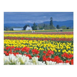 Red Skagit Valley, Mount Rainier, Washington, USA Postcard