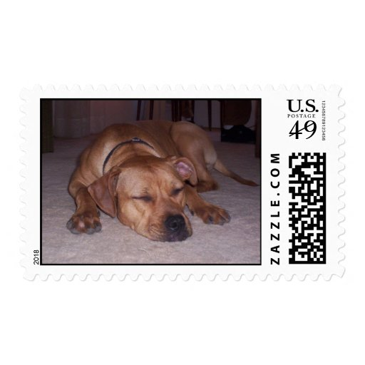 red sleepy pit bull stamp
