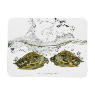 Red slider turtles magnet