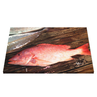 Red Snapper Fish Canvas Print