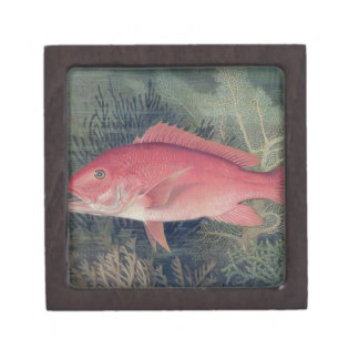 Red Snapper, from 'Game Fishes of the United State Jewelry Box