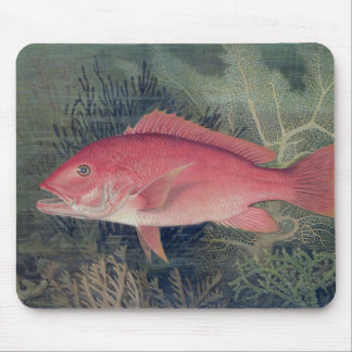 Red Snapper from Game Fishes of the United State Mouse Pad