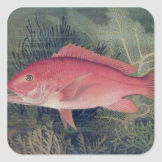Red Snapper, from 'Game Fishes of the United State Stickers