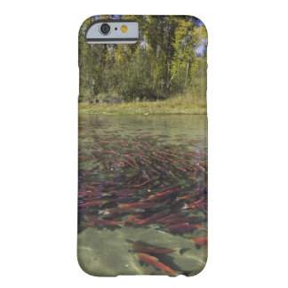 Red Sockeye salmon milling in calm eddy and Barely There iPhone 6 Case