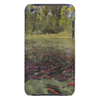 Red Sockeye salmon milling in calm eddy and iPod Case-Mate Cases