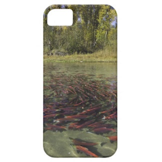 Red Sockeye salmon milling in calm eddy and iPhone SE/5/5s Case