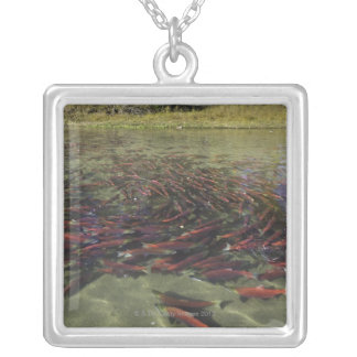 Red Sockeye salmon milling in calm eddy and Square Pendant Necklace