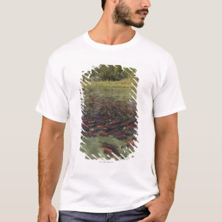 Red Sockeye salmon milling in calm eddy and T-Shirt
