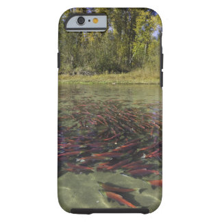 Red Sockeye salmon milling in calm eddy and Tough iPhone 6 Case