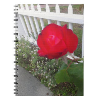 Red Solo Rose Notebook