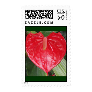 Red Spathe Stamp