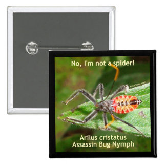 Red Spider Assassin Bug Pin