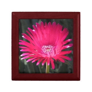 Red Spike Ice Plant Bloom Jewelry Box