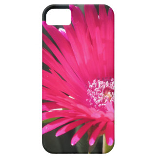 Red Spike Ice Plant Bloom iPhone SE/5/5s Case