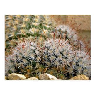 Red spiky cactus postcard
