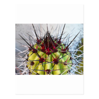 Red Spines Products Postcard