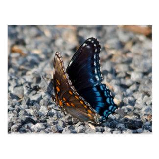 Red Spotte Purple Butterfly Postcard