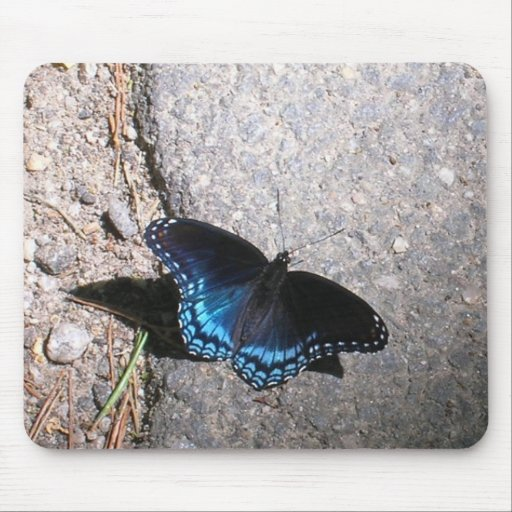 Red Spotted Admiral Butterfly Mouse Pad