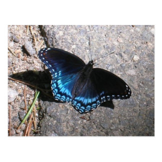 Red Spotted Admiral Butterfly Postcard