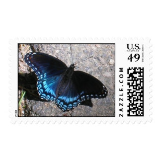 Red Spotted Admiral Butterfly Stamp