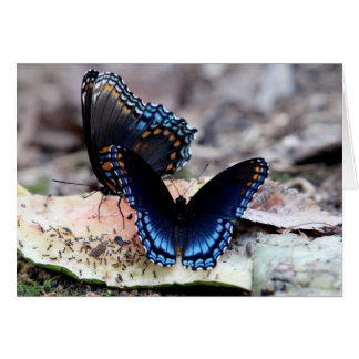 Red-Spotted Purple Butterflies Card