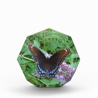 Red Spotted Purple butterfly ~ Award