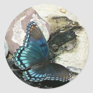 Red-Spotted Purple Butterfly Classic Round Sticker