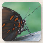 Red-spotted Purple Butterfly Coaster