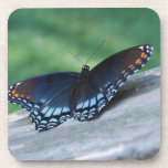 Red-spotted Purple Butterfly Coasters