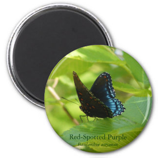 Red-Spotted Purple Butterfly on an Elm Leaf 2 Inch Round Magnet
