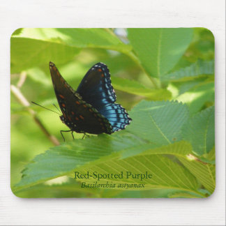 Red-Spotted Purple Butterfly on an Elm Leaf Mouse Pad
