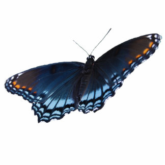 Red-spotted Purple Butterfly pin Statuette